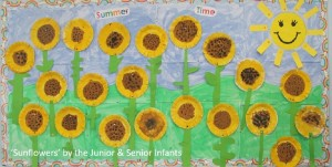 sunflowers at charleville national school