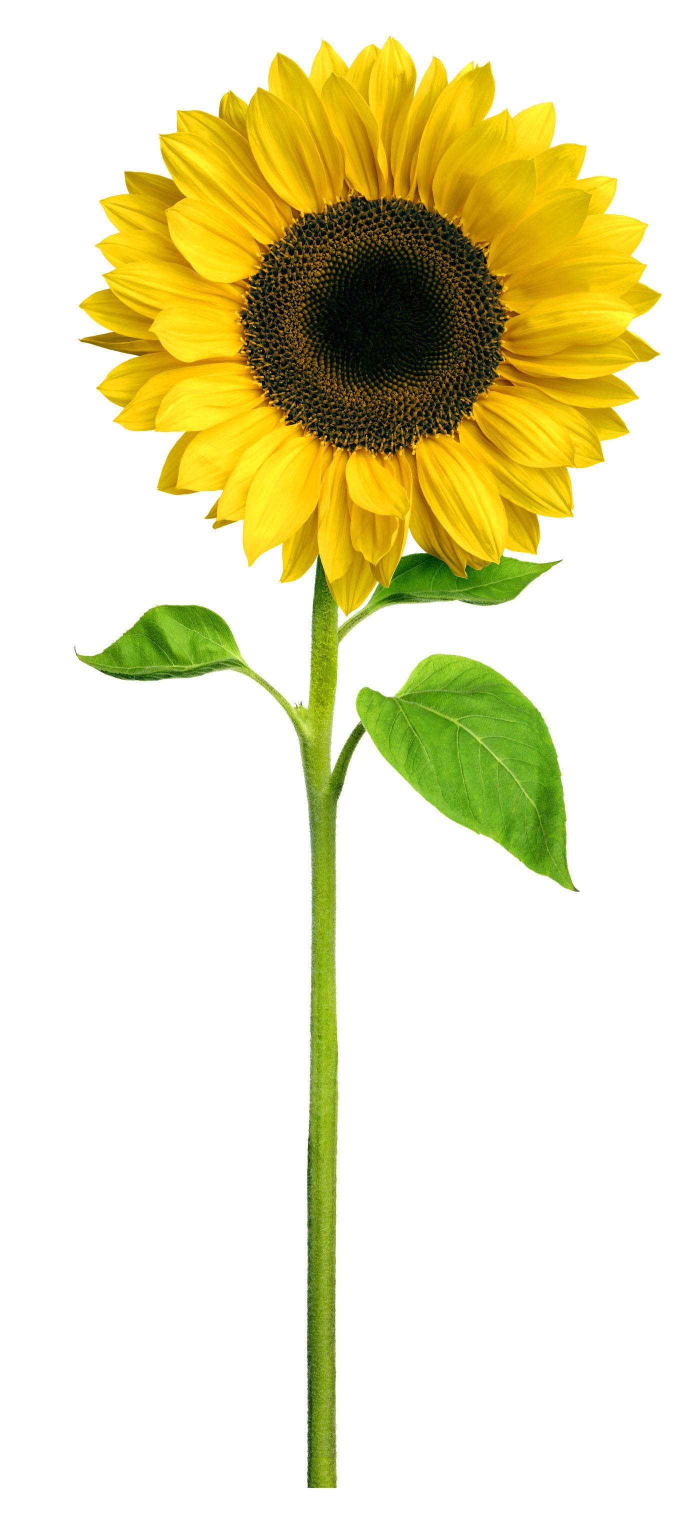 Infants Planting Sunflowers - Charleville National School